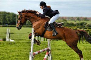 Конкур – самый молодой вид конного спорта