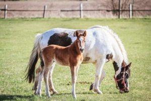 Иппотерапией это метод реабилитации посредством тесного контакта с лошадью