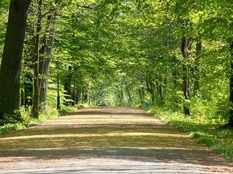 Зеленая зона для прогулок