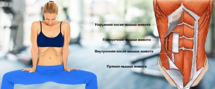 Работа мышц при выполнении упражнения вакуум