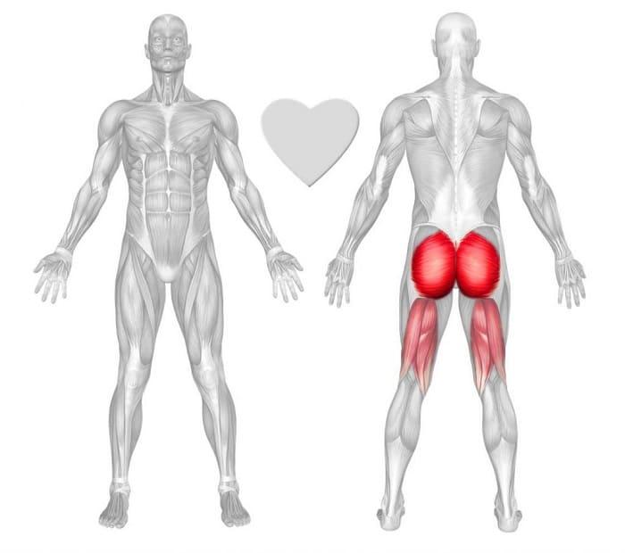 Анатомия ягодиц и бедра