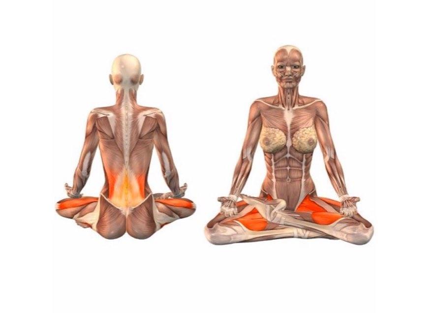 Работа мышц в позе лотоса
