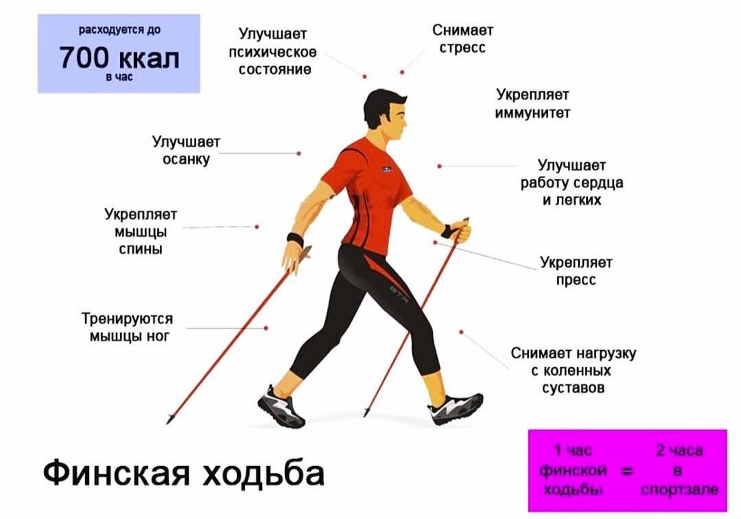 Работа мышц и расход калорий при скандинавской ходьбе