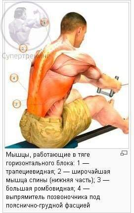 Работа мышц в тяге горизонтального блока