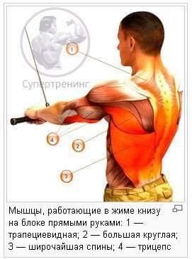 Работа мышц в жиме к низу