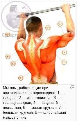 Работа мышц при подтягивании широким хватом