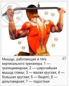 Работа мышц в вертикальной тяге на тренажере